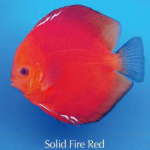 solid_fire_red